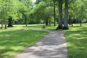 Lane Fitness Trail 2