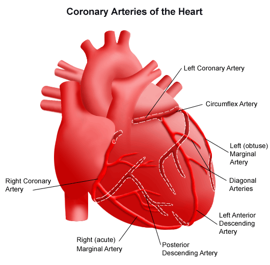Article of the heart