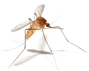 Mosquito-Borne Illnesses - More Than Just Itchy Bumps!
